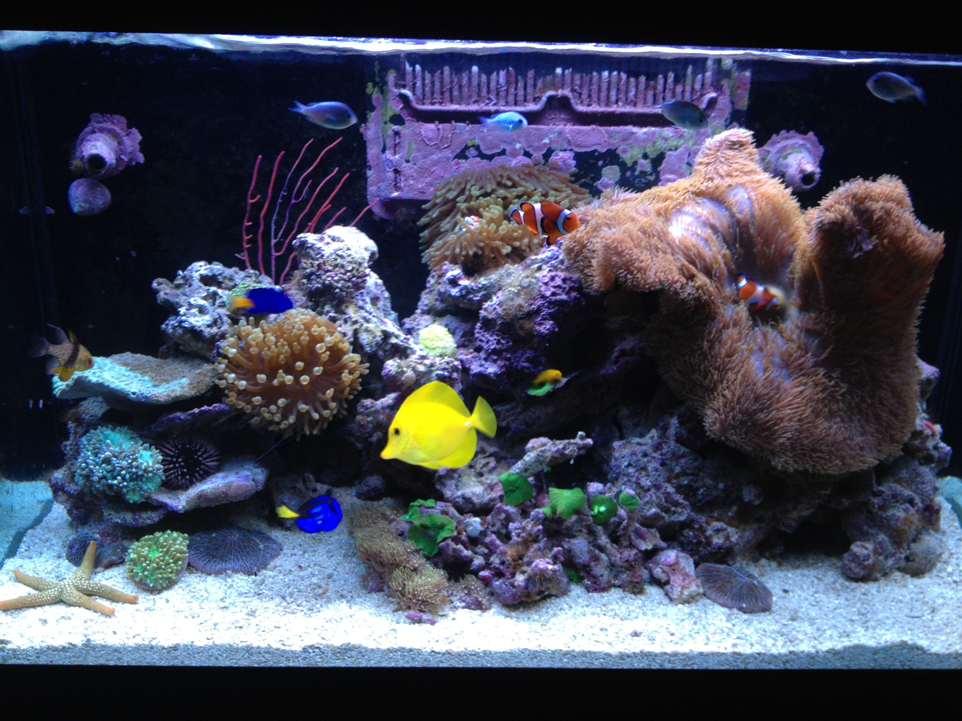 New website launched for saltwater aquarium hobbyists