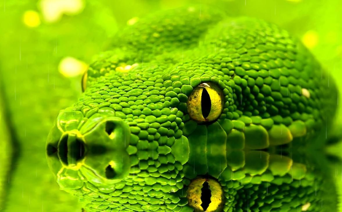 Snakes Animated Wallpaper Snakes Animated Wallpaper