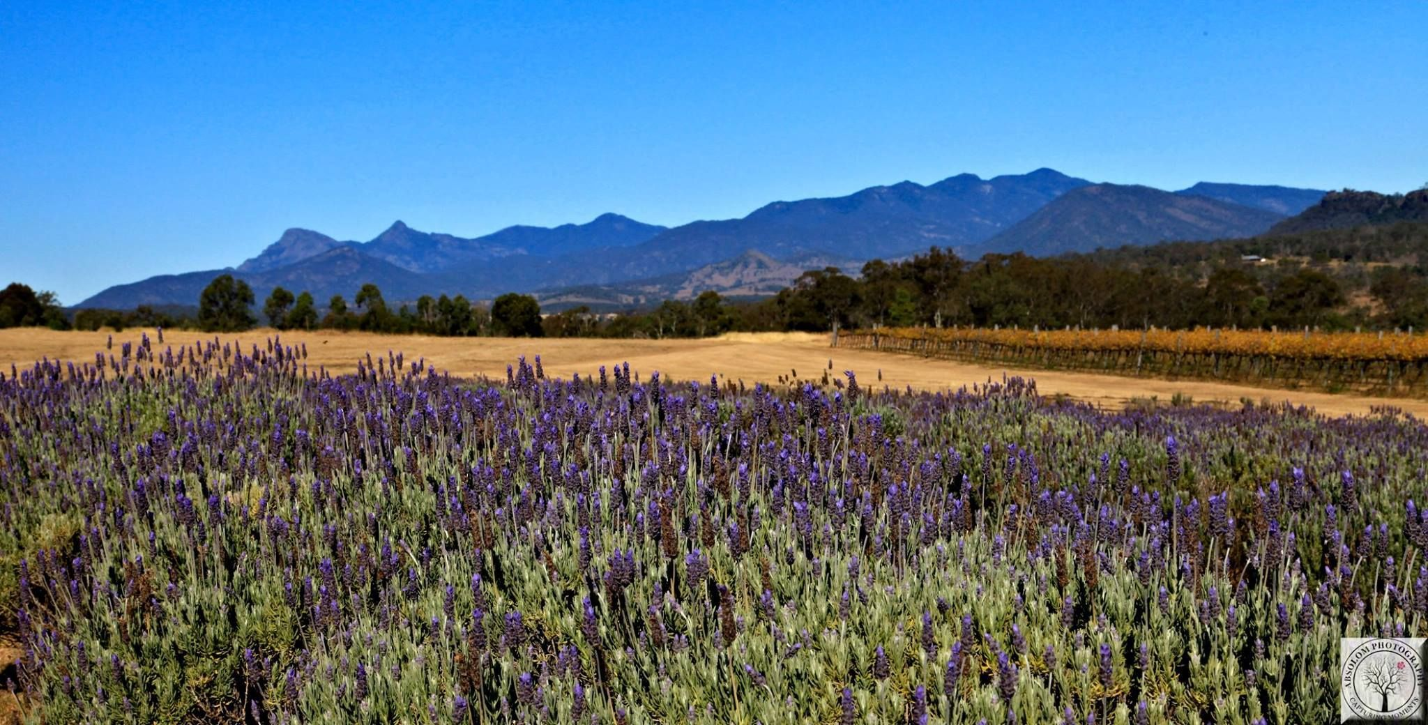 Lavender Farm Mt Alford Qld Lavender Farm Places To See Natural Landmarks