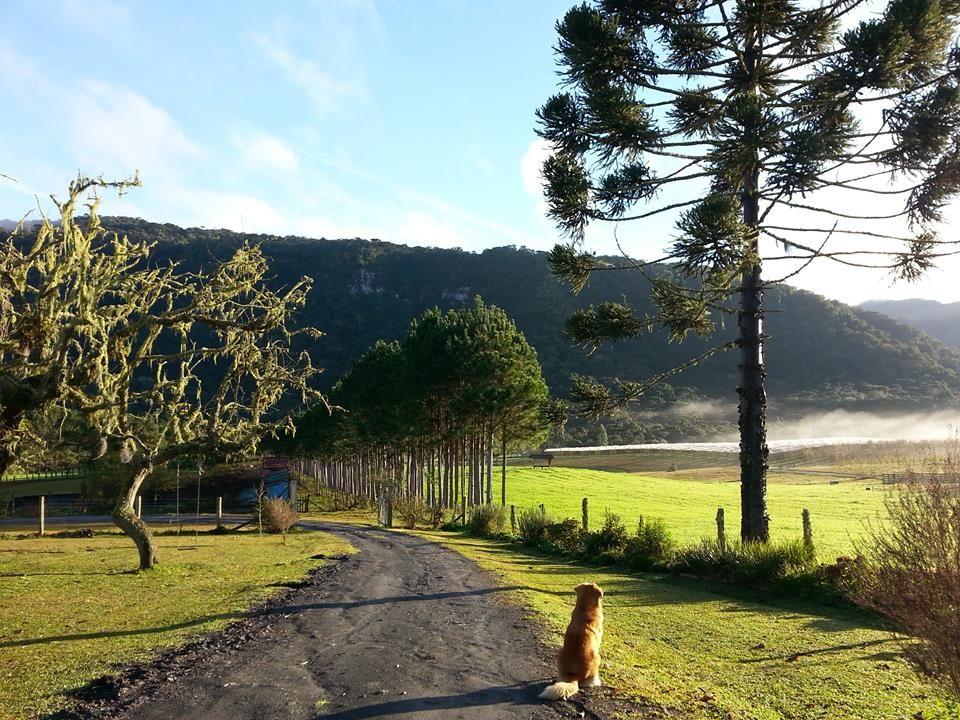 cão observando a paisagem do Jardim de Maria, em Bom Retiro.