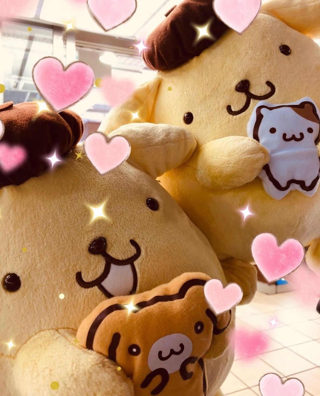 PomPomPurin (((o(*゚ ゚*)o)))♡ Kawaii japan, Cute