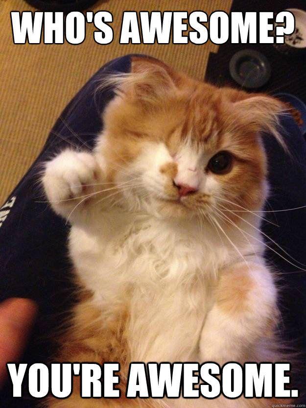 96f08e627bf9fb45feb2c37a08532e53 who's awesome? you're awesome scallawag cats pinterest animal