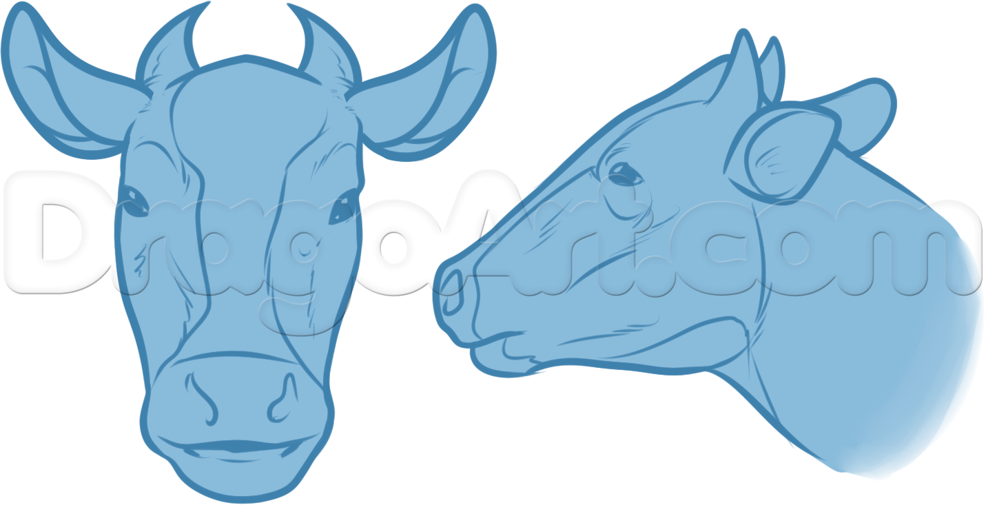 cow anatomy drawing step 4 | For the old house | Pinterest | Drawing ...