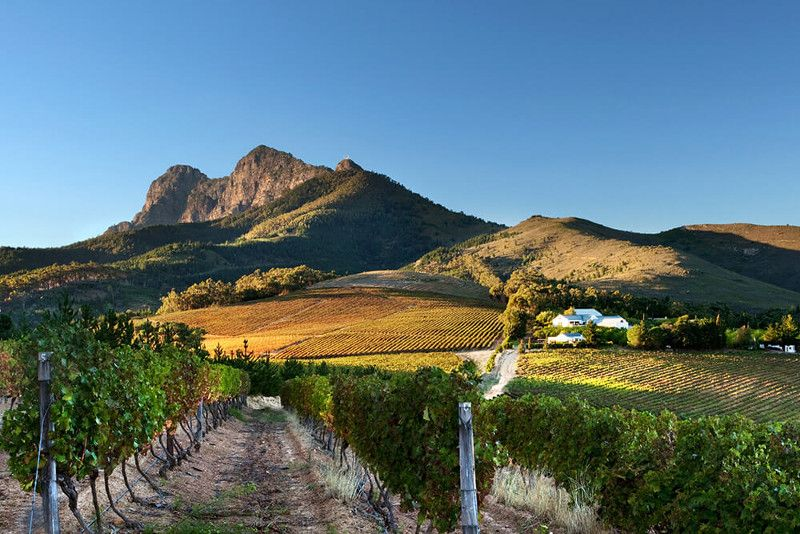 DuVine Cycling Set to Ride Through South Africa   Luxury Travel Advisor