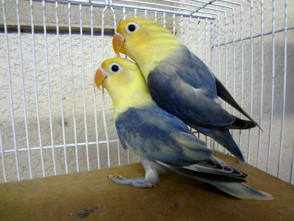 Related Image Aves Pajaros Aves Animales Salvajes
