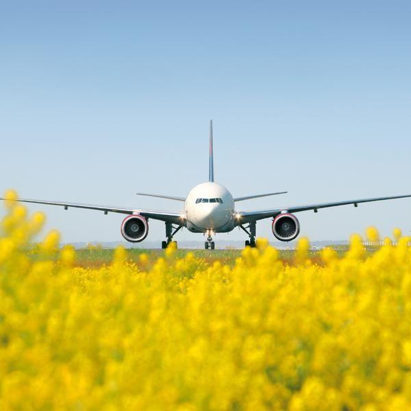 """Aeropuerto internacional de Frankfurt, Alemania.  Esta edificación cuenta con un techo de 40,000 m2 de vegetación. Dicho aeródromo también es el que menos espacio ocupa del mundo respecto a su tráfico, lo cual genera menos impacto en la naturaleza, el techo permite que la temperatura sea más estable, el aire mejore y se aproveche el agua de lluvia. Otras medidas, como el uso de poca agua en los sanitarios y el aprovechamiento de la luz natural, hacen a este aeropuerto el más """"verde"""" de…"""