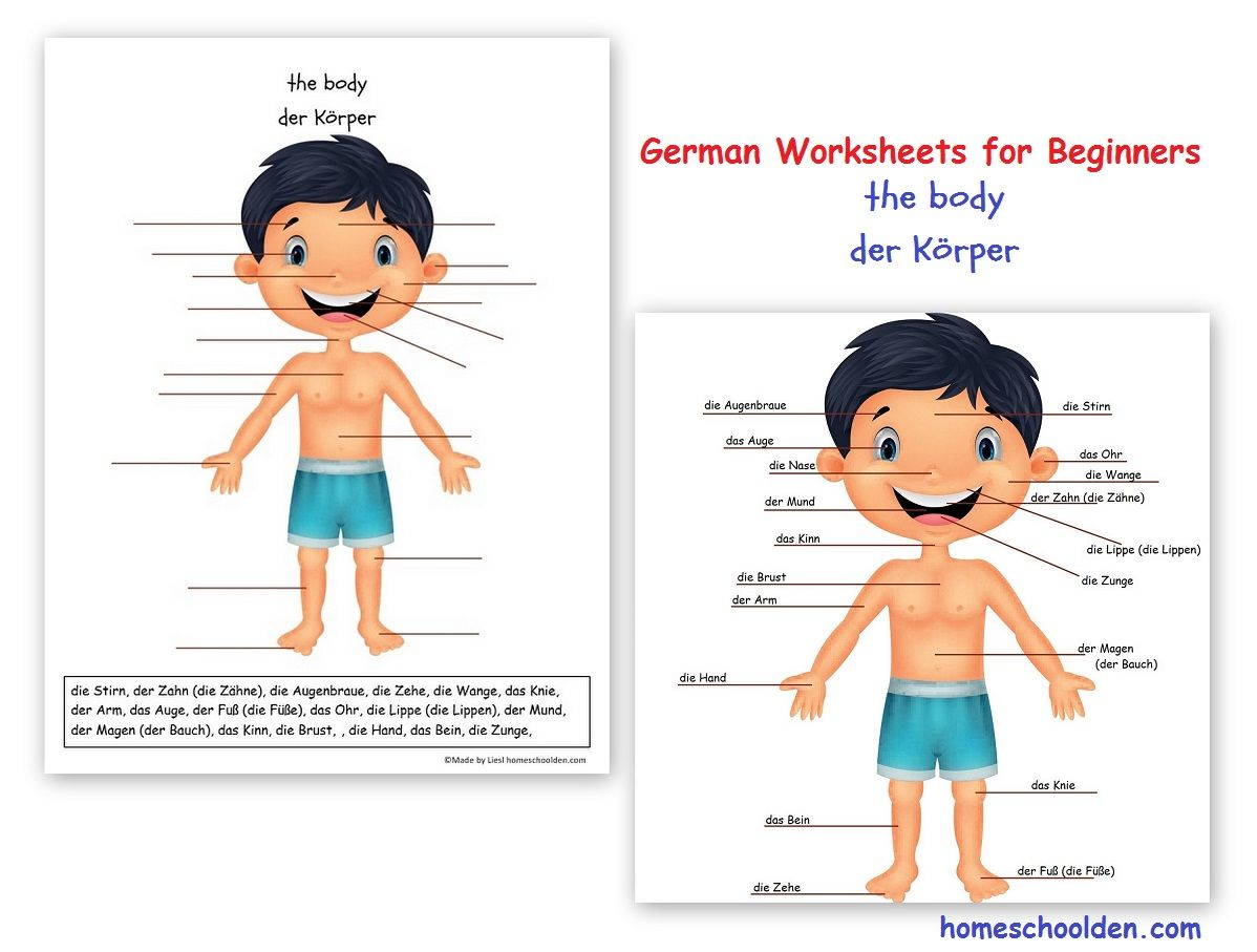 German Worksheets For Beginners The Body Der Korper