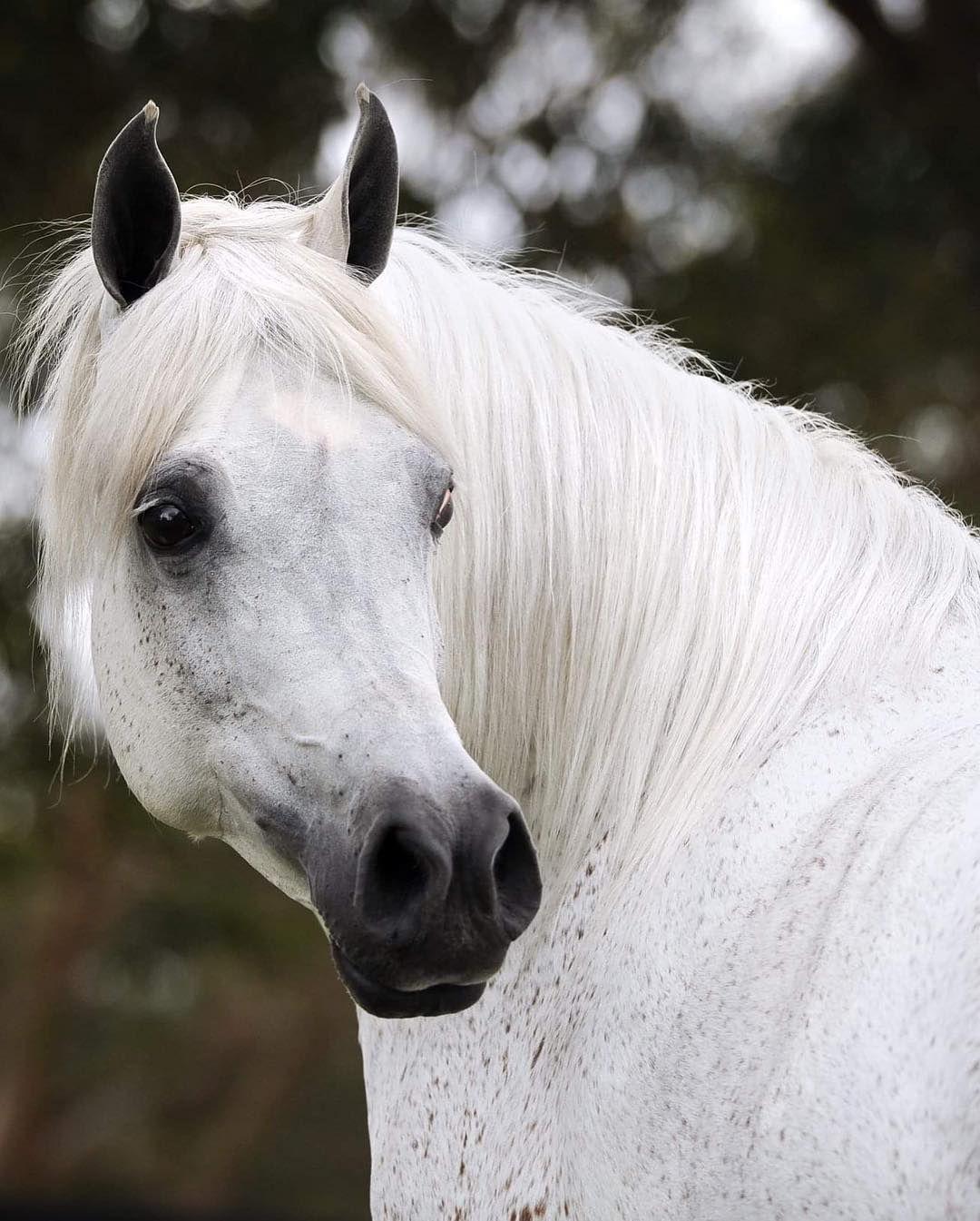موضوع اليوم هو صور لألتفاتتة الخيل و جمال الالتقاطه Horses Instagram Posts Instagram