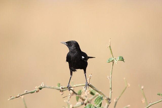 Gratis bild på Pixabay - Fågel, Djur, Fåglar, Afrika, Safari