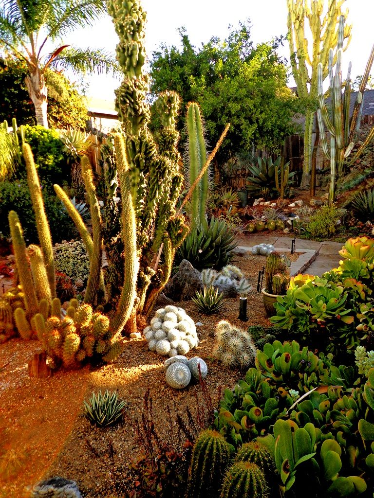 Prickly business: a Southern California specialty nursery | Plants ...