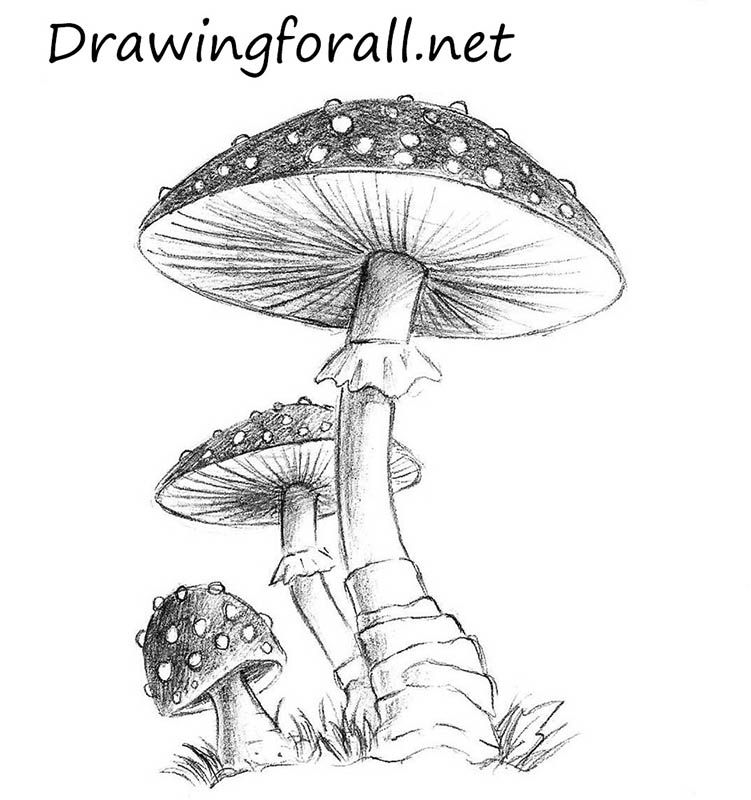 how to draw a mushroom mushrooms
