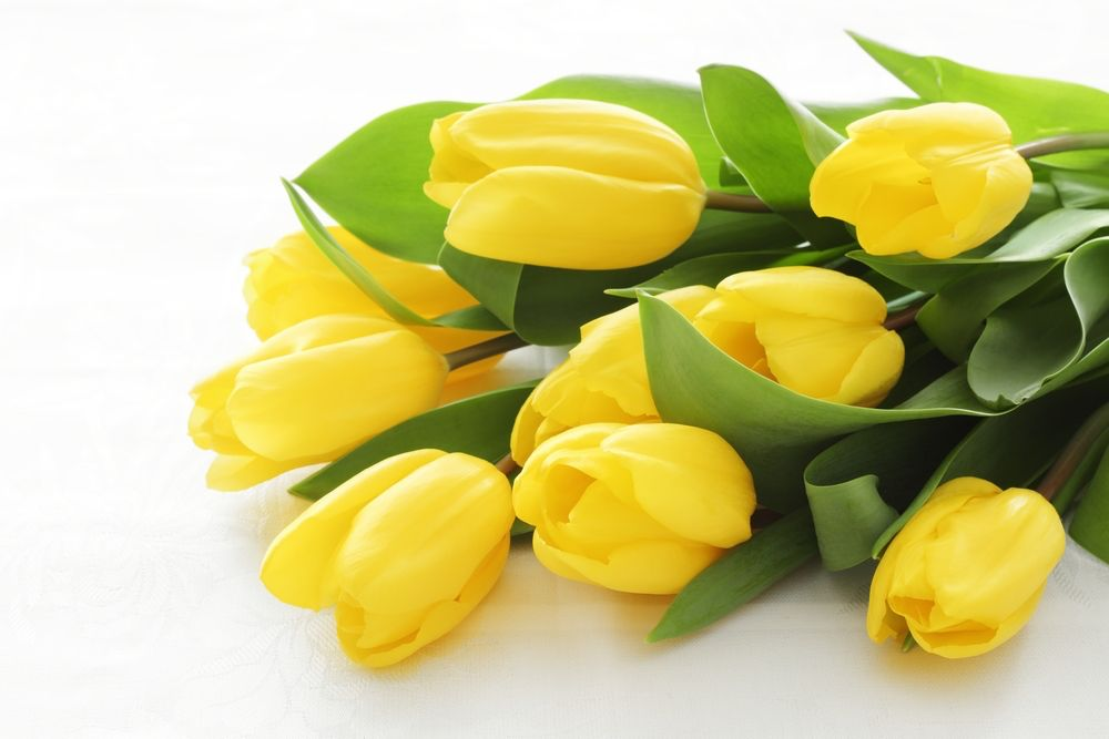 Yellow Flowers Were Once Associated With Jealousy And Hopeless Love But Modern Interpretations Have Gotten A Lo Language Of Flowers Tulips Meaning Red Tulips