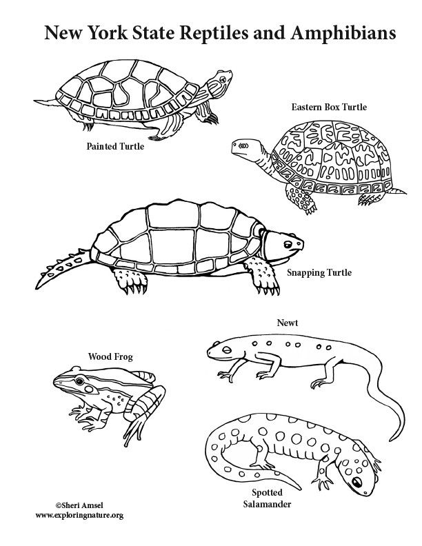 Snapping Turtle Coloring Page - youngandtae.com in 2020 ...