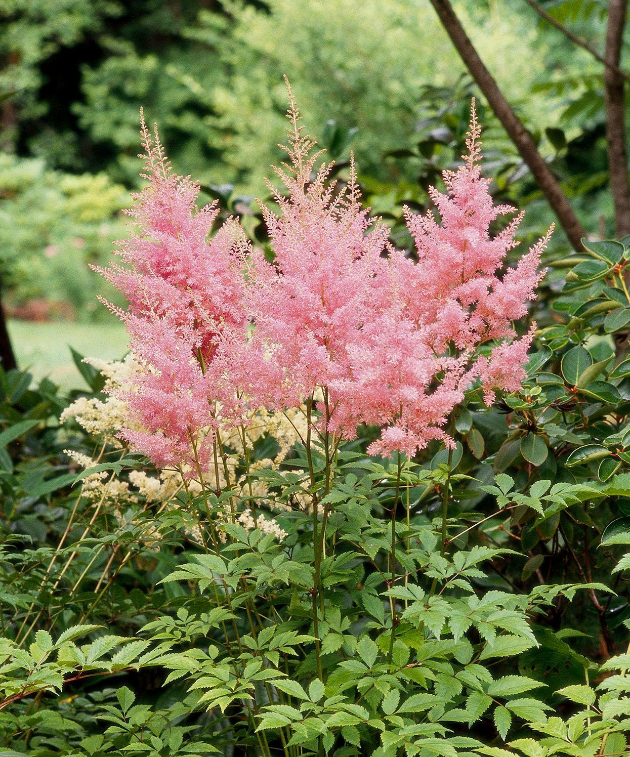 These 17 Colorful Plants Are The Perfect Solution For Shady Spots In Your Yard In 2021 Shade Plants Shade Flowers Flowers Perennials
