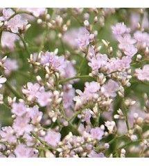 kridtvejs blomster
