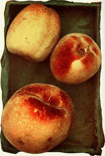 "Image from page 163 of ""Biggle orchard book : fruit and orchard gleanings from bough to basket"" (1911) 