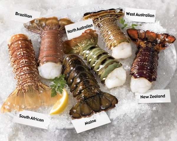 10+ Different Types of Lobster with Pictures | Gate Information | Lobster  dishes, Lobster recipes, Grilled lobster