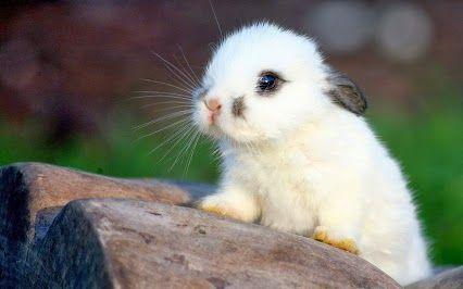 Too Cute Cute Animals Cute Baby Bunnies Cute Baby Animals