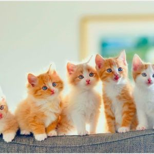 Orange kitten wallpaper cute orange kittens wallpaper orange orange kitten wallpaper cute orange kittens wallpaper orange kitten wallpaper altavistaventures Choice Image