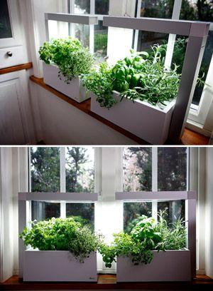 Herbie syst me de culture indoor hydroponique id al pour - Colture idroponiche in casa ...