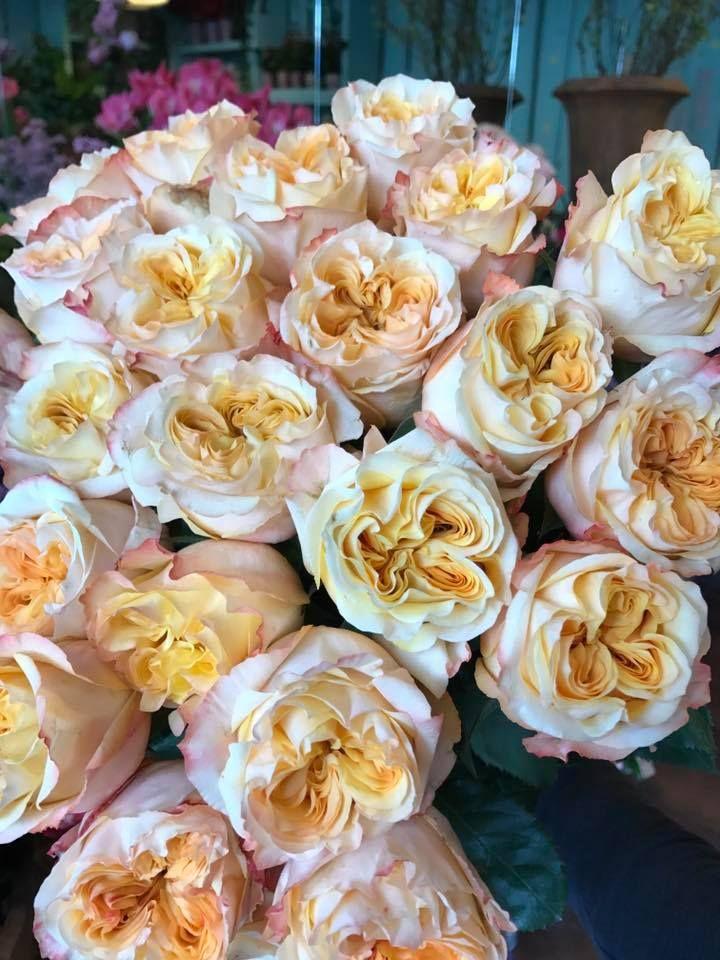... My Secret Garden, And More! BEDNARIK Flower Shop