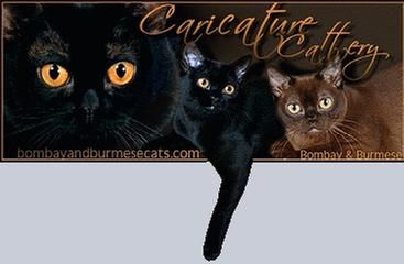Burmese cat breeders hunter valley