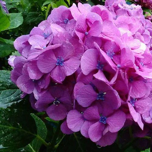 "darlingmako: "" #original photographer #amateur #summer #tuesday #morning #flowers #photographer on tumblr #instagram (Matsudo City,Chiba Ken,Japan) """