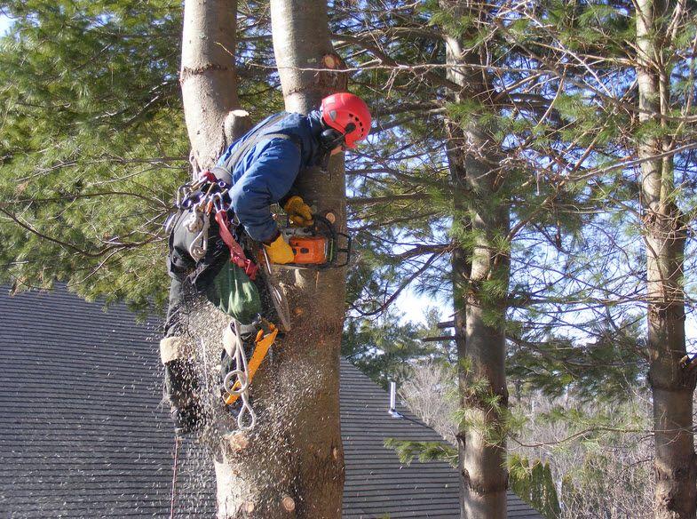 Tree Removal Services Sydney Tree removal service, Tree