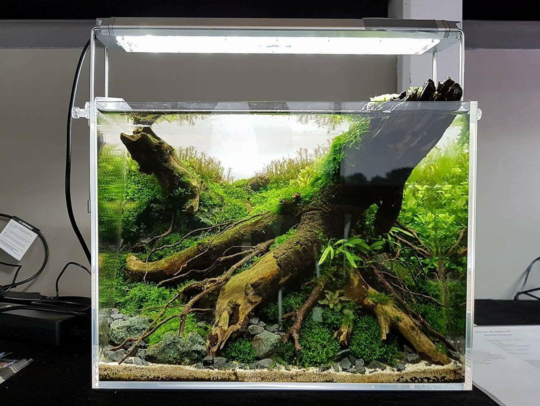 1,268 Likes, 9 Comments   Green Aqua (@greenaquashop) On Instagram: U201cADA  Cube Garden 60H Set. With Black Lava, Hemianthus Glomeratus, Riccardia, A U2026
