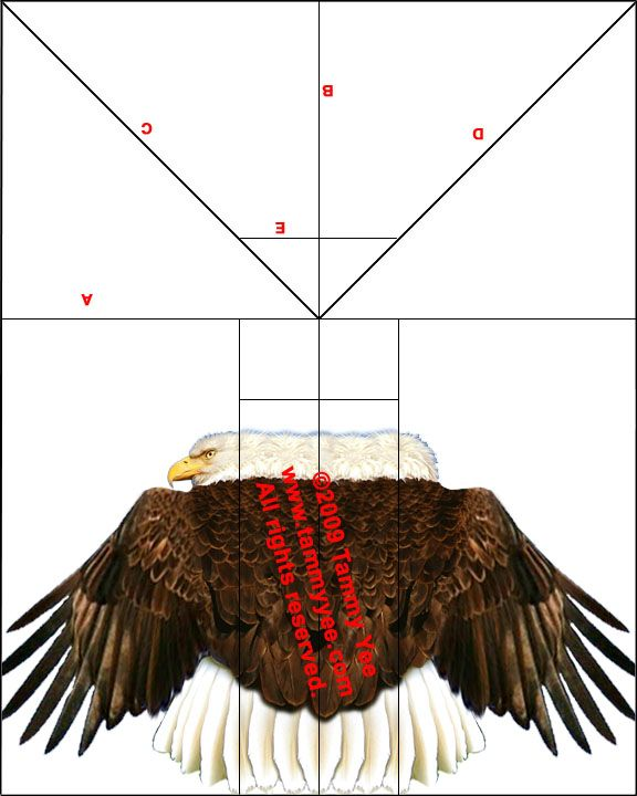 Bald Eagle Paper Airplane  Travel N Stuff  Kids  Birds Of