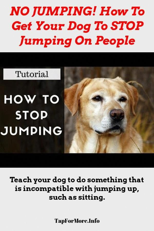 Creative Determined Puppy Training Free Gift With Purchase Dog