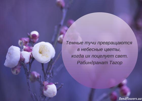 картинка цветок цитатой думаю, каждый родитель