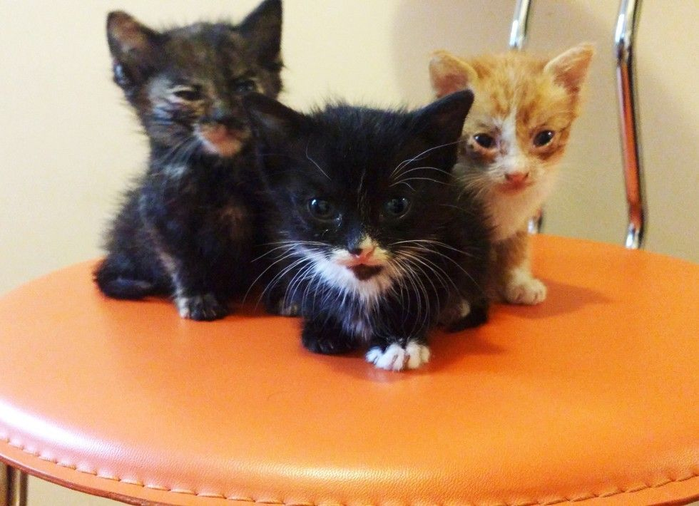 Man Saves 3 Orphaned Kittens From Pouring Rain And Becomes Their Dad Kittens Smart Dog Kitty