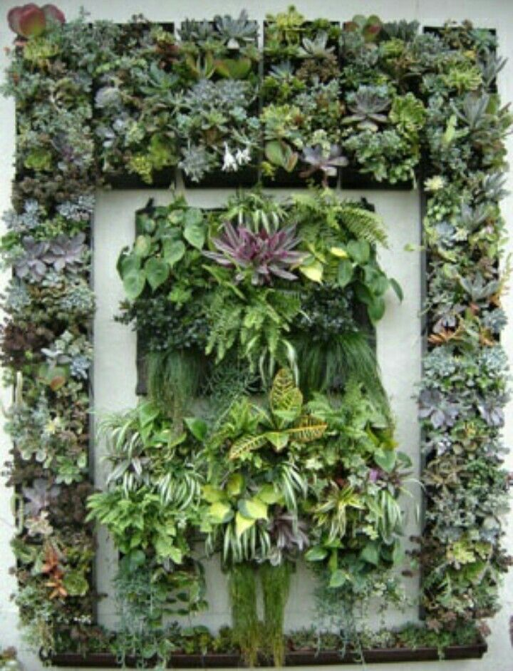 Personalize Your GroVert Living Wall Www.buylivingwalls.com