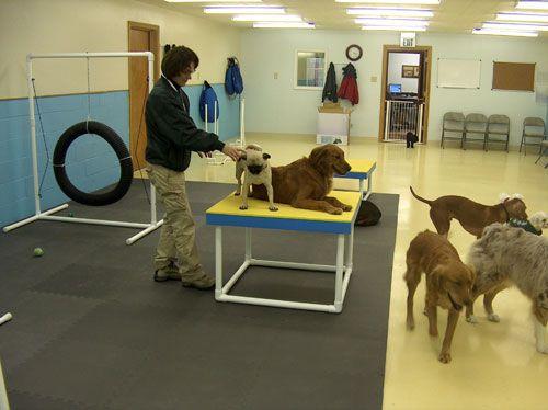 A Pvc Climb Dog Training Room Dog Training Dogs Train