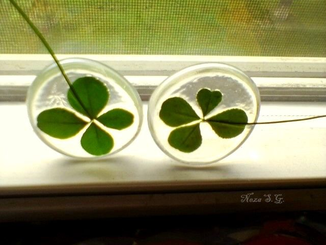 potted clovers - Google Search