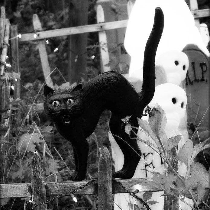 scaredycat #halloween #vintagehalloween #halloweendecorations - vintage halloween decorations
