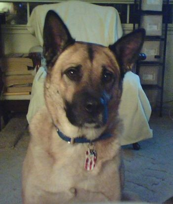 Labrador Retriever Hybrid Dogs Lab Mix Puppies Hybrid Dogs Dog Breeds