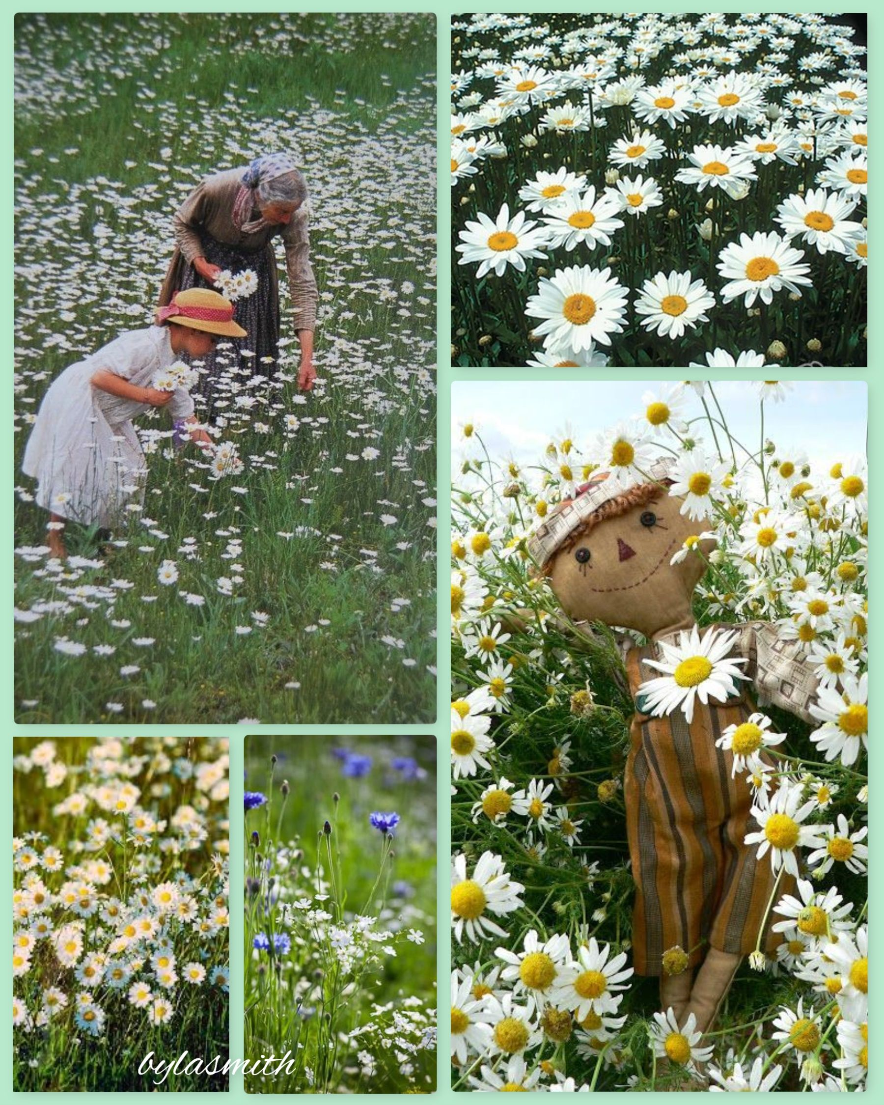 Picking Daisies by LA Smith
