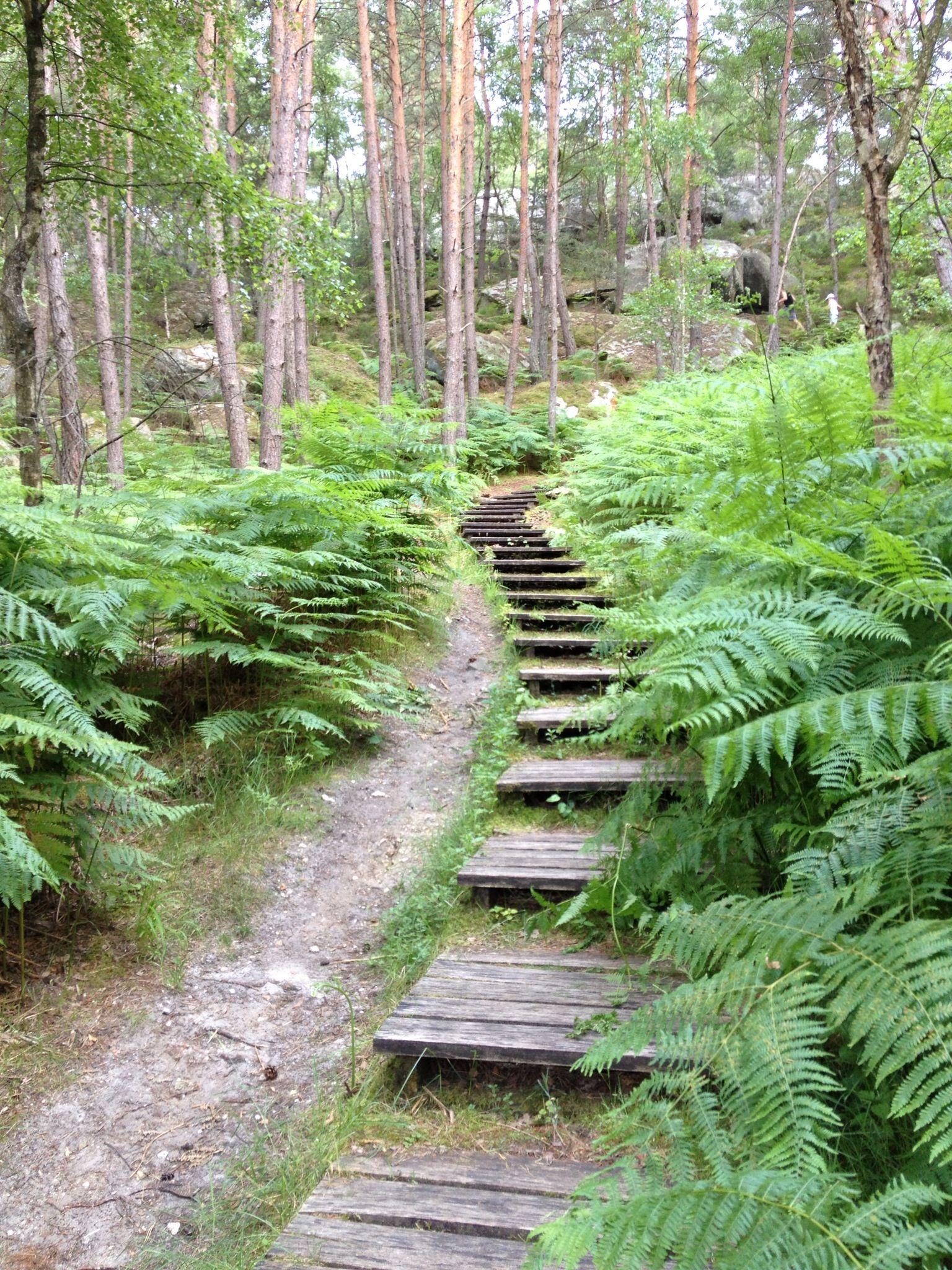 Escaliers en bois aux gorges de franchard for t de - Paysagiste fontainebleau ...