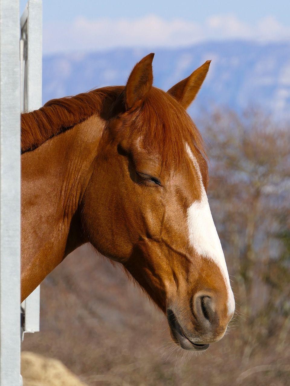 Как спят лошади: в каком положении (лёжа или стоя), где и ...