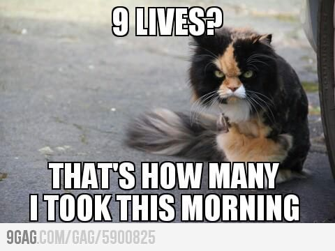 Angry Cat On 9 Lives Funny Good Morning Memes Cat Memes Clean Funny Animal Pictures