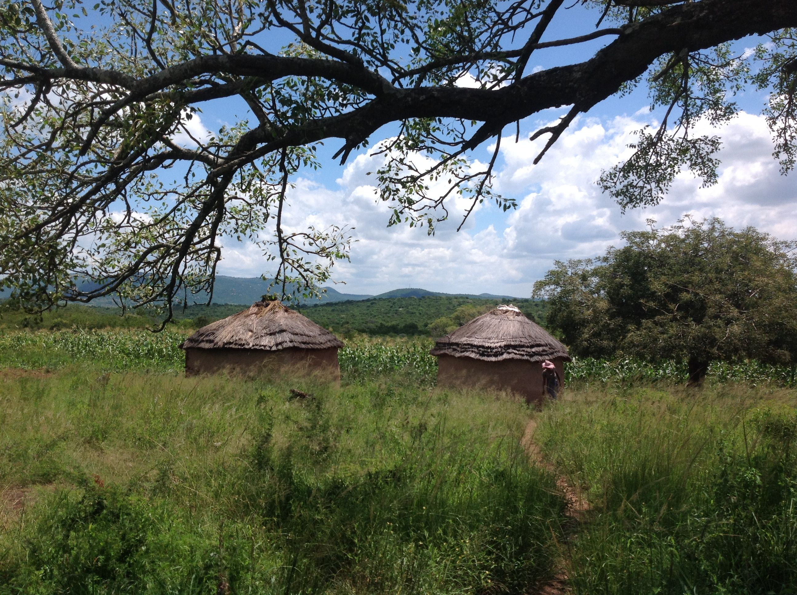 typical homestead in Swaziland.