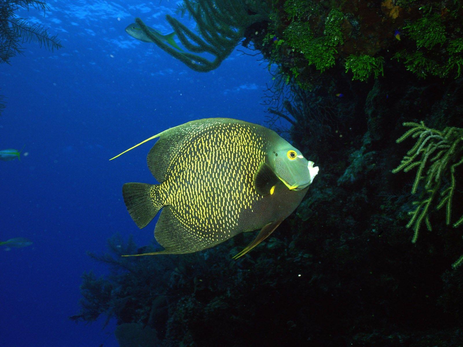 Free Deep Blue Sea Image