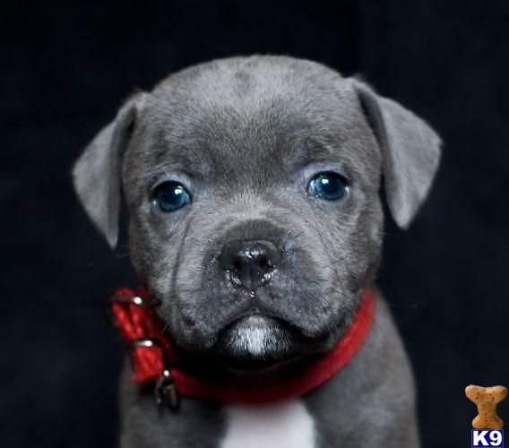 CUTEST FREAKIN DOG EVER! MUST HAVE!