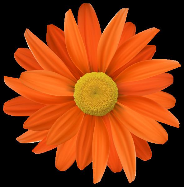 Orange Flower Transparent Png Clip Art Flower Background Iphone Flower Aesthetic Flower Clipart