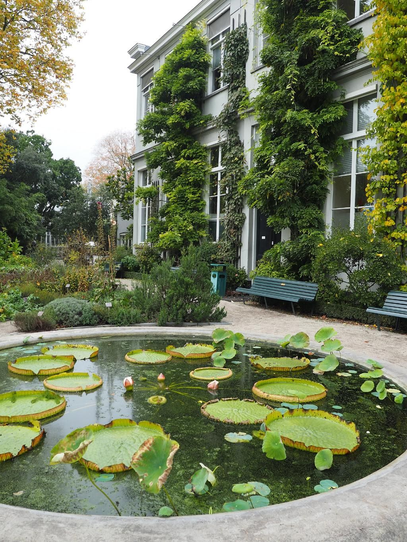 Botanical Garden Hortus Botanicus Garden Planning Botanical Gardens Garden Pictures
