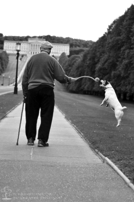 Photographer: John Lynn  A Belfast pensioner's dog launches a sneak attack on their morning stroll  in Stormont estate.  - John Lynn