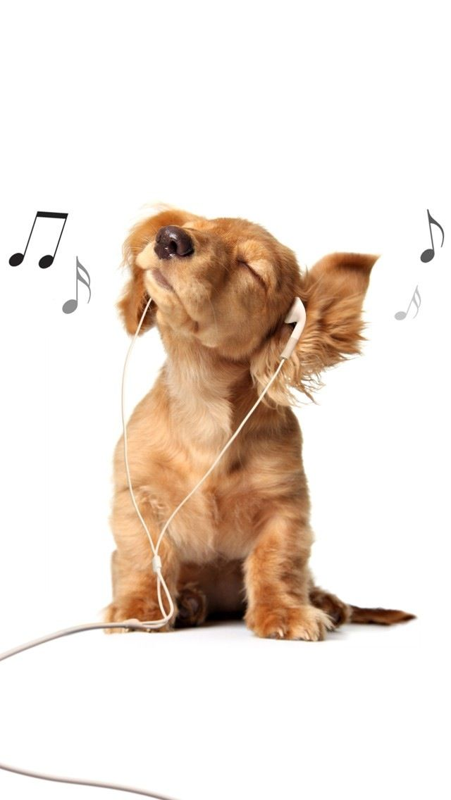 Tap And Get The Free App Animals Dog Funny Music Headphones Cute