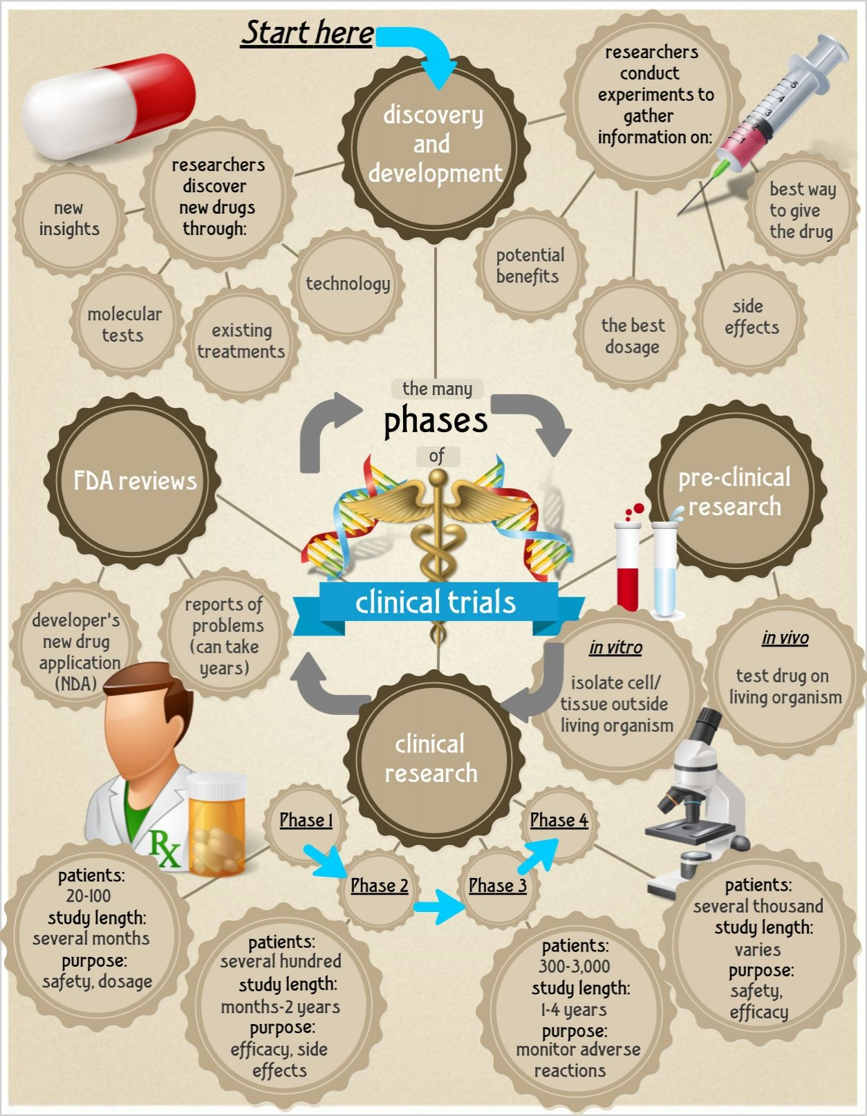 phases of clinical trials science infographics career to be phases of clinical trials infographics lightscap3s com